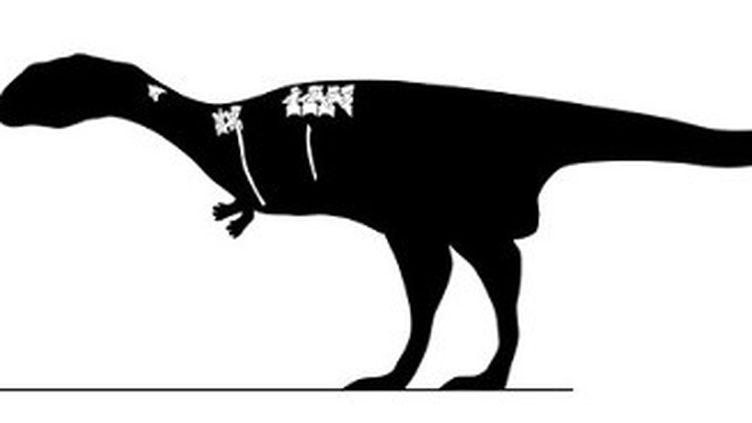 Le Dahalokely tokana vivait il y a 90 millions d'années etmesurait entre 2,75 mètres et 4,3 mètres. (RAYMOND M. ALF MUSEUM OF PALEONTOLOGY)