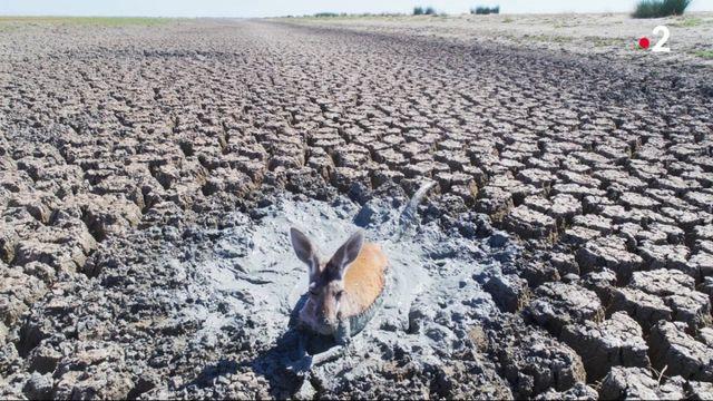Australie/États-Unis : des températures extrêmes