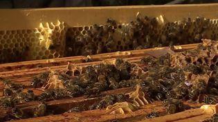 Agriculture : une saison de récolte du miel catastrophique. (FRANCE 3)