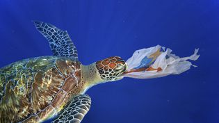 Les tortues de mer prennent les sacs en plastique pour des méduses, une de leurs ressources alimentaires. (PAULO DE OLIVEIRA / MAXPPP)