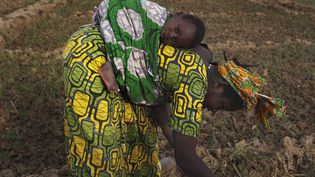 Une Malienne plante des haricots dans une ferme le 22 janvier 2013. Elles sont des milliers à passer des heures à cultiver la terre sans pouvoir accéder à la propriété foncière. (Photo Reuters/Joe Penney )
