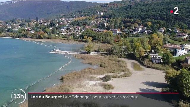 Écologie : le lac du Bourget se vide pour sauver les roseaux