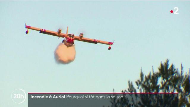 Incendie à Auriol : premier feu de forêt de la saison, pourquoi si tôt ?