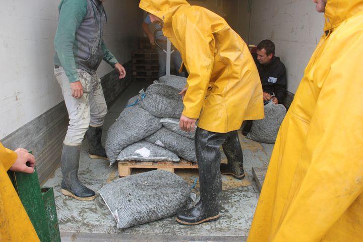 Des pêcheurs à pied déchargent des sacs remplis de coques, le 22 juin 2021, au Crotoy (Somme). (CLEMENT PARROT / FRANCEINFO)