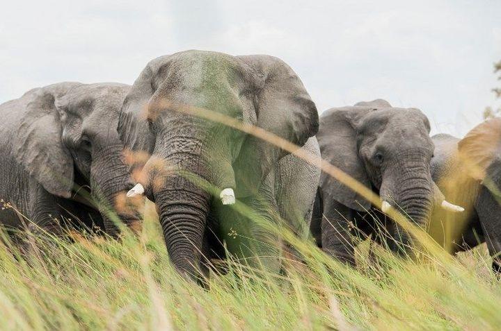 Les derniers massacres ont été découverts près de la réserve naturelle protégée du delta de l'Okavango, qui attire des touristes du monde entier.  (ROSANNA U / IMAGE SOURCE/AFP)