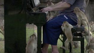 En Thaïlande, les touristes ont déserté la ville de Lopburi à la suite de la pandémie de Covid-19. Affamés, les singes sont devenus hors de contrôle. Un musicien anglais étudie leurs réactions face à la musique. (FRANCEINFO)