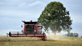 La moisson de colza dans les champs du Berry en 2012. (MAXPPP)