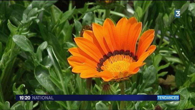 Tendances : un dimanche botanique à Rochefort