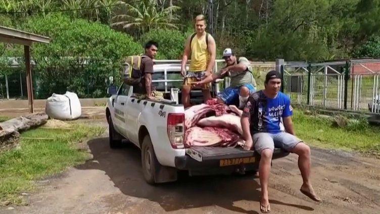 La Polynésie française est relativement épargnée par le Covid-19 avec seulement quelques dizaines de cas mais la situation économique est difficile. Pour s'en sortir, certains habitants sont obligés de chasser et de pêcher. (France 2)