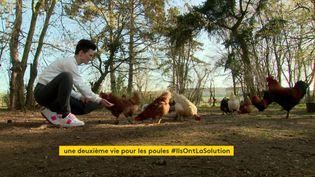 Opération cocotte dans l'Eure, pour sauver de l'abattoir les poules de réforme (France 3 Normandie)