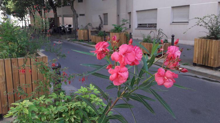 Soumis en 2015 au vote sur le budget participatif, le projet de bacs à fleur est devenu réalité rue Carrière-Mainguet dans le 11e arrondissement de Paris (RADIO FRANCE / JULIA BLANCHETON)