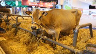 Une vache au Salon de l'agriculture de Paris, le 24 février 2017. (MAXPPP)