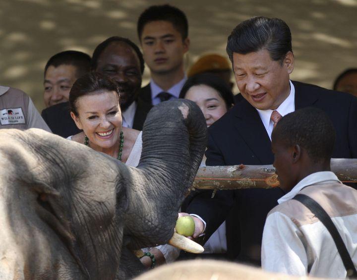 Le président chinois, Xi Jinping, visite un sanctuaire de la faune sauvage à Harare (Zimbabwe), le 2 décembre 2015. Il promet d'aider l'Afrique à protéger sa faune. (Photo AFP/Philimon Bulawayo)