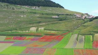 Italie : les fleurs de Castelluccio attirent les visiteurs (France 2)