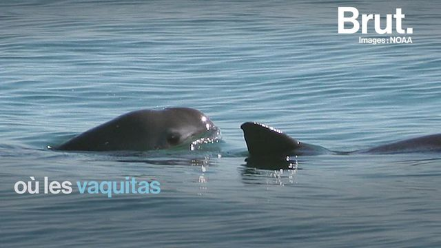 Libérée par Sea Shepherd, cette baleine est l'énième victime collatérale de la pêche illégale. Pour exploiter cette zone marine ultra-sensible, les braconniers ne reculent devant rien...