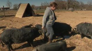 Cochons d'élevage : l'âge d'or pour la Gascogne  (FRANCEINFO)