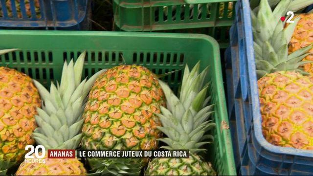 Costa Rica : le commerce juteux de l'ananas