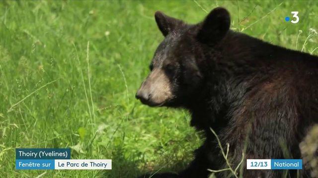 Animaux : le parc zoologique de Thoiry, un tour du monde du règne animal