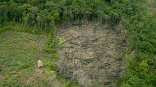 Coupe de bois dans une fôret vierge au Vénézuéla, le 6 septembre 2020. (PHILIPPE ROY / AFP)