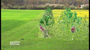Envoyé spécial. quand la plaine regorgeait d'oiseaux... il y a seulement quinze ans (FRANCE 2 / FRANCETV INFO)