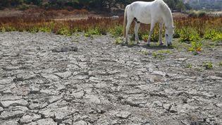 Un cheval sur une terre desséchée, à Bastelicaccia,en Corse, le 27 juin 2017. (PASCAL POCHARD-CASABIANCA / AFP)