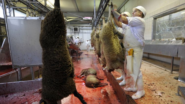 A l'abattoir de Corbas, près de Lyon (Rhône), le 27 novembre 2009. (PHILIPPE DESMAZES / AFP)