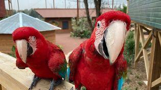 Dans le parc animalier Parrot World, on approche de très près les perroquets. (INGRID POHU / RADIO FRANCE)
