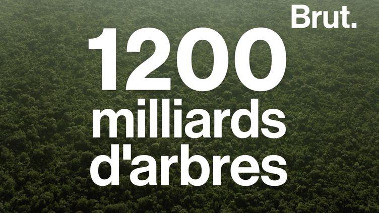 VIDEO. 1200 milliards d'arbres pour réduire le C02 de, l'atmosphère ? (BRUT)