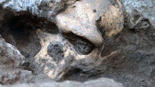 Le crâne 5 a été découvert par les paléontologues sur le site géorgien de Dmanisi, en 2005. (GEORGIAN NATIONAL MUSEUM / AFP)