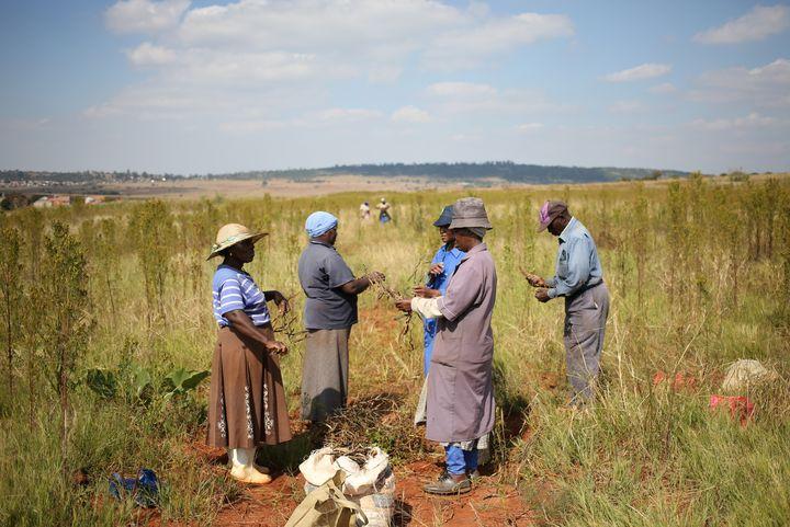 Récolte de haricots au sud de Johannesburg, le 29 avril 2019 (REUTERS - SIPHIWE SIBEKO / X90069)
