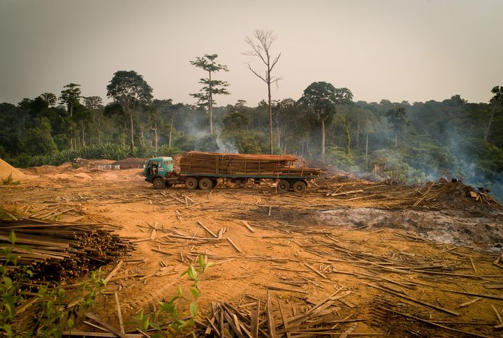 Le virus Ebola en Afrique s'est propagé particulièrement dans les zones déforestées. (MICHAEL KRAUS / EYEEM / EYEEM)
