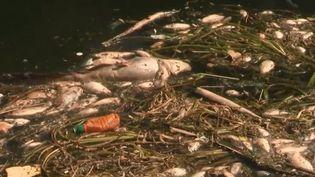 Des tonnes de poissons morts ont été repêchées dans la Seine. L'eau est polluée après les rejets d'une station d'épuration qui gère 60% des eaux usées de la région parisienne. (FRANCE 3)