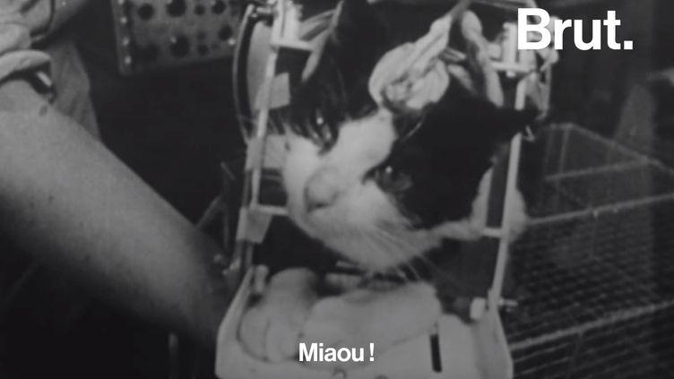 VIDEO. Félicette, le premier chat à être revenu vivant de l'espace (BRUT)
