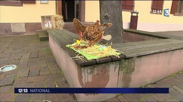Environnement : des poules pour réduire les déchets alimentaires