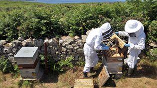 Des apiculteurs sur l'île d'Ouessant, dans le Finistère, le 6 juillet 2010. (FRED TANNEAU / AFP)