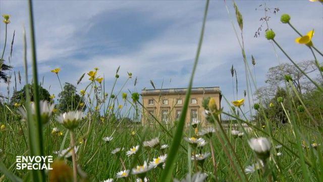 Envoyé spécial. Château de Versailles : grâce au confinement, le jardin de Marie-Antoinette est redevenu comme il y a 300 ans
