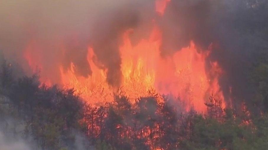 Incendies : le sud de l'Europe ravagé par les flammes