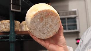 """Capture d'écran de la vidéo """"Selfmade"""", qui explique comment fabriquer du fromage à partir de bactéries prélevées chez l'homme. (CHRISTINA AGAPAKIS / YOUTUBE)"""