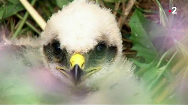 Biodiversité : les oiseaux nicheurs en danger