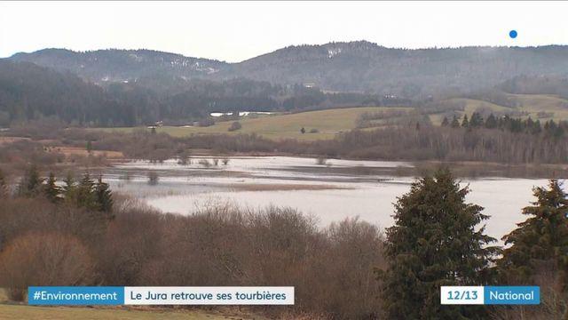 Environnement : le Jura reconstitue ses tourbières