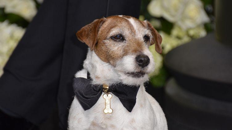 Uggie pose lors des Oscars, le 26 février 2012 à Hollywood (Etats-Unis). (JOE KLAMAR / AFP)