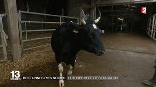 """""""Fine"""", la mascotte du salon de l'Agriculture (France 2)"""