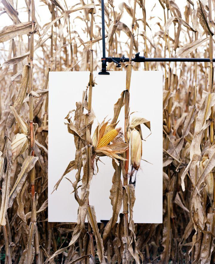 En 1996, Monsanto® introduisit les premières semences OGM et s'assura que les agriculteurs ne soient plus en mesure de conserver les semences.  (Rencontres d'Arles)