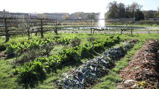 Compost et culture de légumes au Potager du roi à Versailles  (Ludovic Marin / AFP)