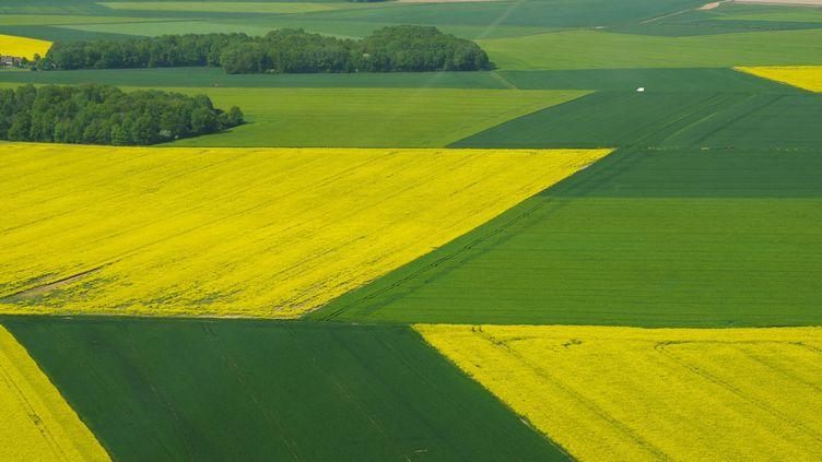 Une plaine avec ses champs cultivés au Printemps. (PIERRE NEVEUX / RADIOFRANCE)