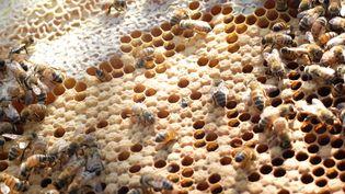 Des abeilles dans une ruche à Lattes, près de Montpellier (Hérault), vendredi 11 juillet 2015. (MARIE-ADELAIDE SCIGACZ / FRANCETV INFO)