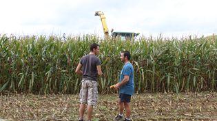 Florent Leportier (à gauche) et Côme Delaunay (à droite), devant un champ de maïs appartenant à l'exploitation de Côme, le 27 septembre 2017 à Faverolles (Orne). (VALENTINE PASQUESOONE / FRANCEINFO)