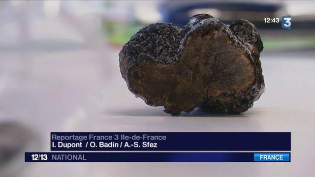 Insolite : une truffe découverte sur le toit d'un hôtel parisien