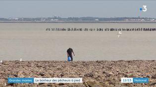 Le retour des grandes marées est une aubaine pour les pêcheurs à pied à la recherche de crevettes. Les coefficients dépassent les 100. De quoi passer un bon moment comme à Fouras, en Charente.  (France 3)