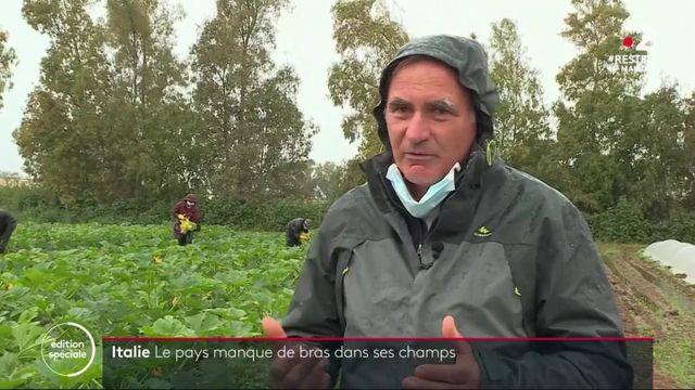 Coronavirus : l'Italie en manque de mains d'œuvre pour les récoltes agricoles